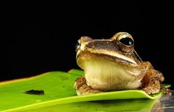 Zjedz tę żabę - Brian Tracy