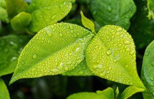 Referat: Edukacja ekologiczna - znaczenie i metody